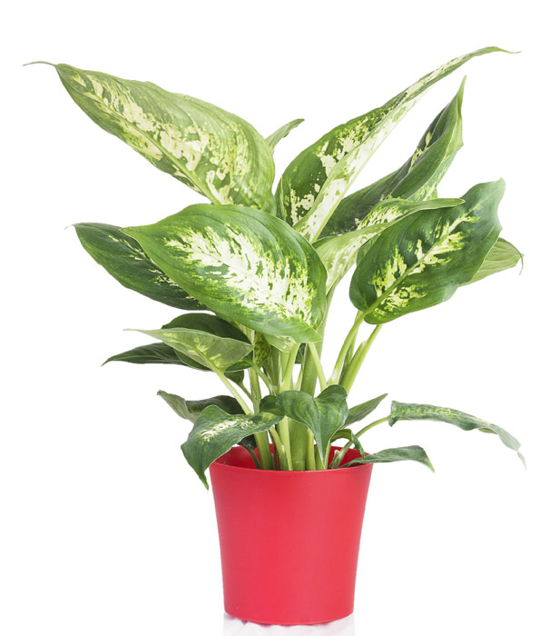 6 Common Home And Garden Plants That Are Poisonous To Your