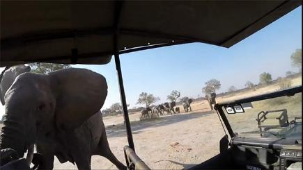 Elephant ramming safari truck