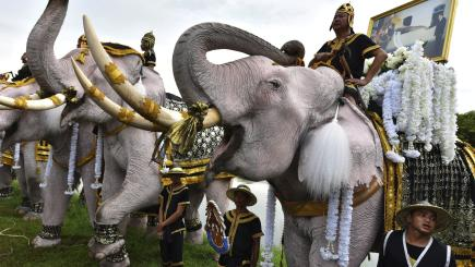 Elephants lead Thailand's tributes to former king one year after death