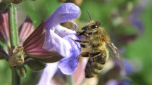 Expert tips for turning your outdoor space into a honeybee heaven
