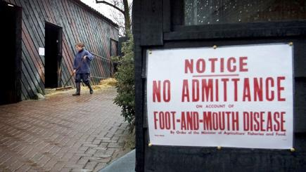 February 19, 2001: Foot-and-mouth outbreak begins in the UK