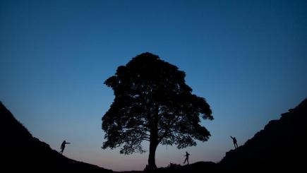 The tree at Sycamore Gap in Northumberland has been named England's Tree of the Year by the Woodland Trust