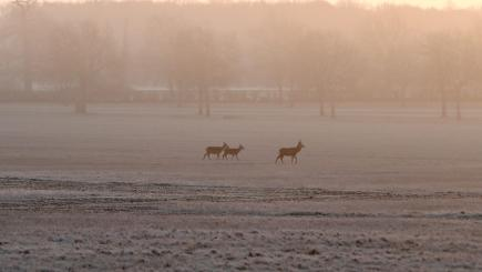 Frost forecast as temperatures set to plummet across UK
