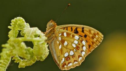 Gardeners Urged To Rally To The Defence Of The Butterfly Bt