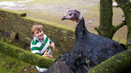 Gobbles the turkey has escaped the fate of most of his fellows this Christmas by repeatedly flying into a tree. Farm owner Ollie Matthews, pictured, has now made him a pet. Photo credit: SWNS