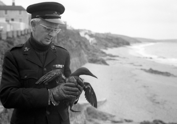 RSPCA Inspector Gilbert Griffiths holds a guillemot covered in crude oil picked up on Porthleven beach, Cornwall