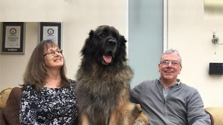 Hagrid the dog from Britain's Got Talent