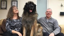 Hagrid the Leonberger from Britain's Got Talent 2017 with owners David and Sarah Woodthorpe-Evans