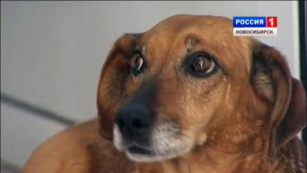 Heartbroken dog turns up at hospital every day looking for deceased owner