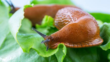 Slugs inspire 'potentially life-saving' medical glue