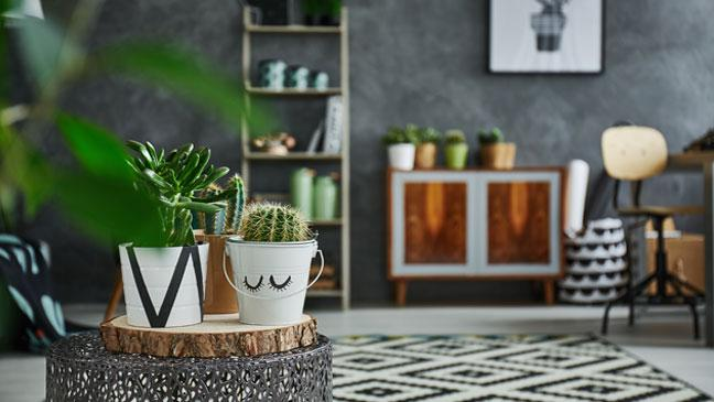 Low-maintenance houseplants: 5 of the best for beginners - BT on