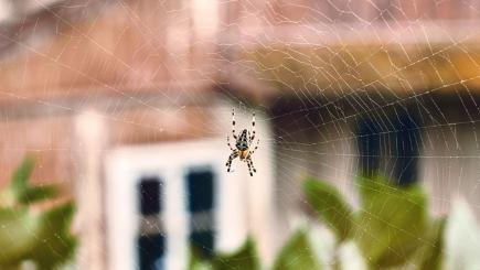 Stock image of a spider in its web outside a house.