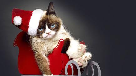 How to get rid of a cold sore 7 unusual ways to banish that grumpy cat ccuart Image collections