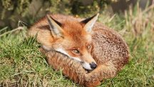 How to animal-proof your garden and keep foxes and cats at bay