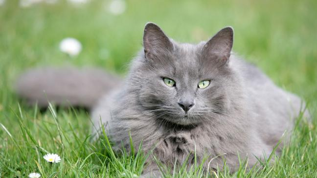 11 ways to get rid of cats from your garden BT