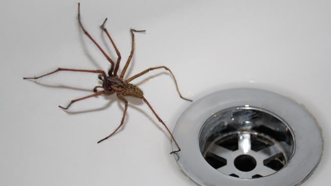Spider myths busted Find out the real way to get rid of spiders