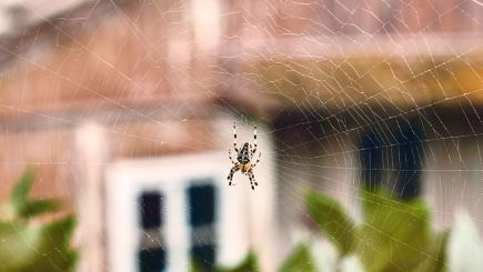 4 ways to stop spiders coming into your house bt for How to stop spiders coming in your house