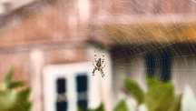 Spider in cobweb outside house