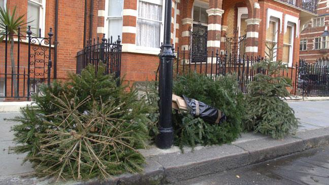 What to do with your old Christmas tree - BT
