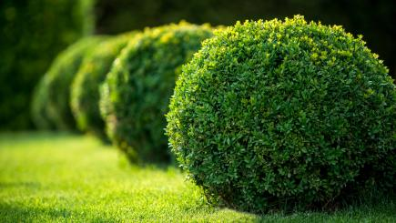 How to get to grips with topiary in the garden