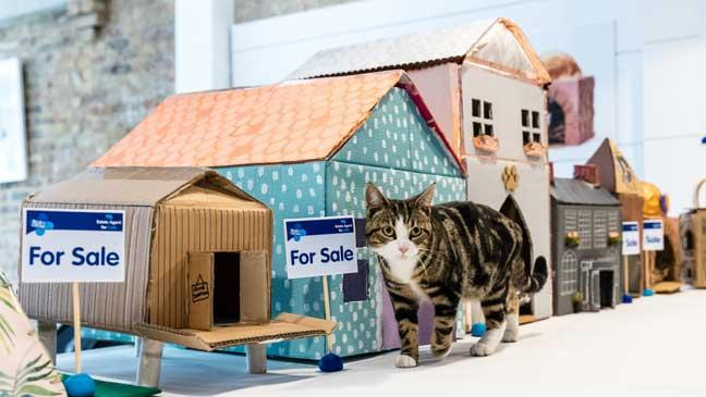 How to make a cosy cardboard cat house - BT