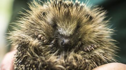 How to make your garden safe for hedgehogs