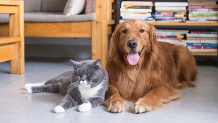 How to prepare your home for a rehomed pet: 6 things you need