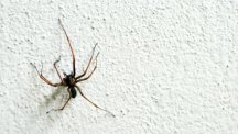 How to spider proof your home