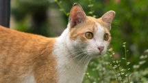 How to stop unwanted cats from coming into your garden