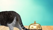 How two cats ringing bells are ruling the internet right now