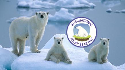 Three polar bears on iceberg
