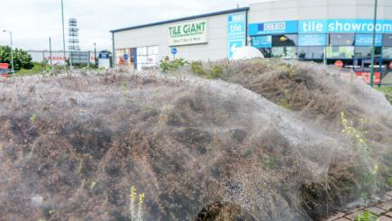 Is this the biggest cobweb you have ever seen?