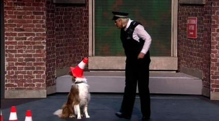 ITV offers refund to 'misled' voters who backed BGT's Jules and Matisse the dog