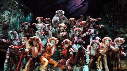 Cast of Cats the musical