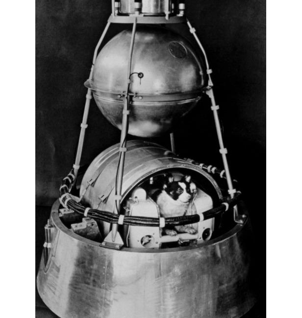 Laika's 'kennel' in the body of the Sputnik 2 satellite.