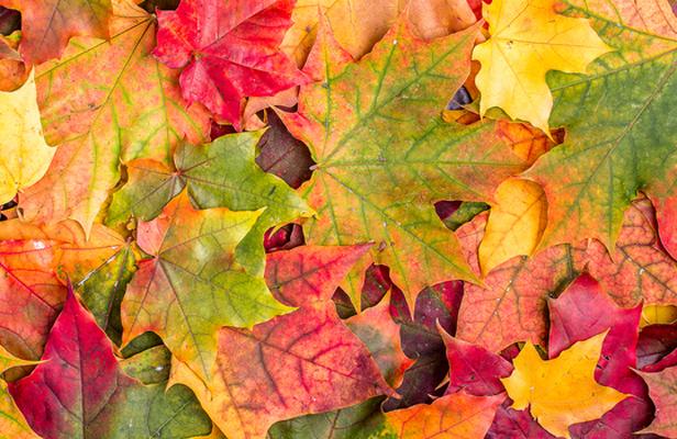 Autumn leaf mobiles