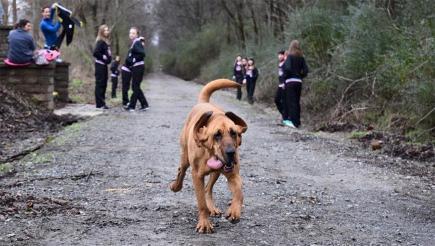 Dog Finishes Seventh In Alabama Half-Marathon