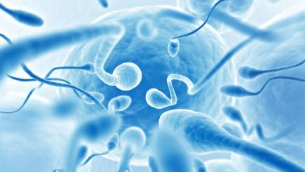 Here's What That Sperm Concentration Study Actually Means For Humans