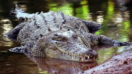 Man killed by crocodile in Australian national park