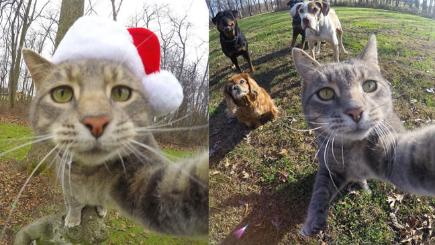 Meet The Cat Who Can Take Selfies Bt