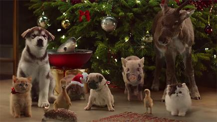 Mcvitie s cute animal choir joins the christmas advert for Christmas pictures of baby animals