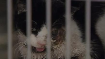 Miracle cat crawls back from grave