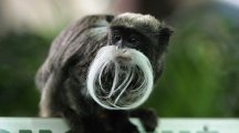 Movember 2016: 11 animals with a better moustache than you