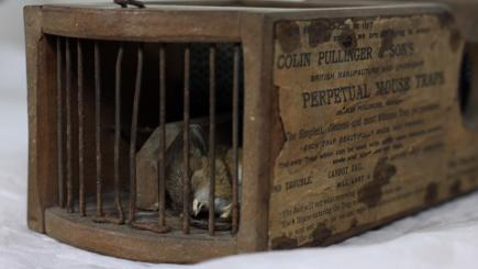 Mouse discovers 155-year-old trap still works