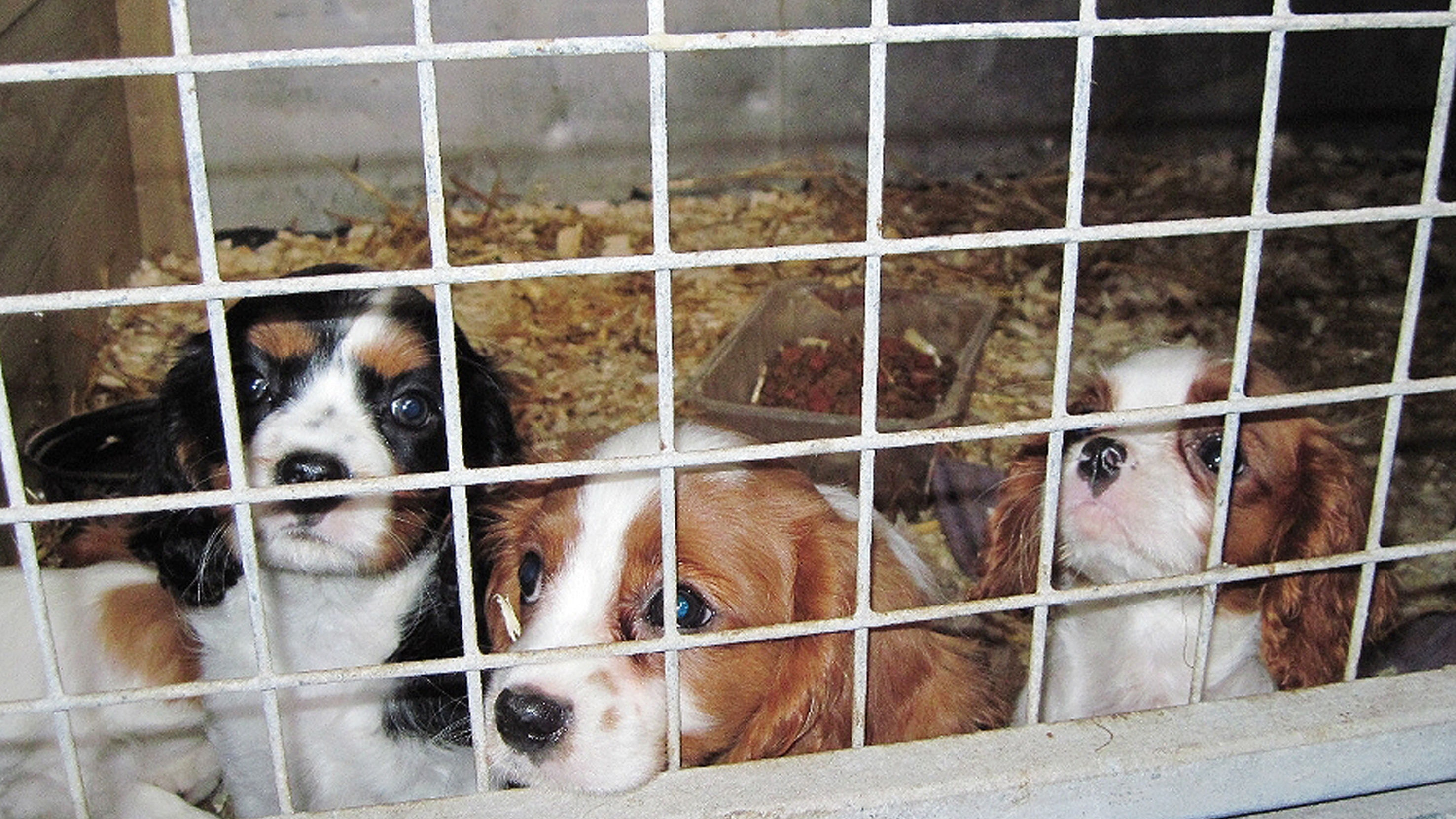 Dozen dogs found dead in kitchen freezer at 'feces-filled' puppy mill