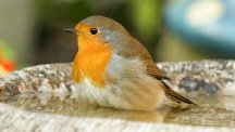 Average numbers of robins seen in gardens were up to their highest levels since 1986, the survey revealed