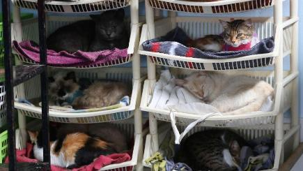 Sick cats rest in Maria Torero's hospice for felines at her home in Lima, Peru. (AP)