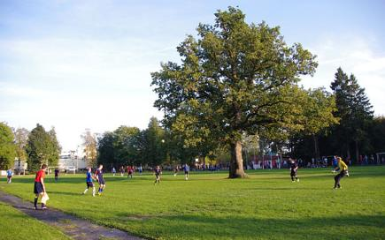 Oak tree on a football field, Orissaare, Saaremaa, Estonia