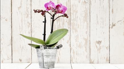 How To Look After Your House Orchids Bt