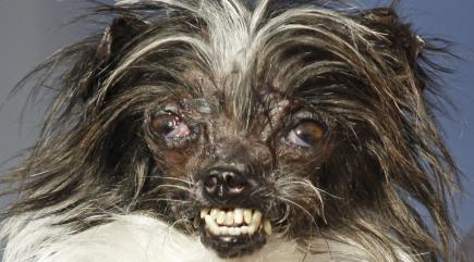 World's Ugliest Dog crowned